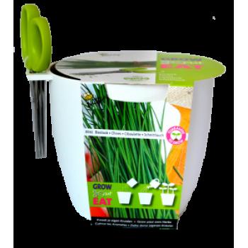 Kit pentru Cultivare Chives (Arpagic) cu Foarfeca - ALB