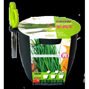 Kit pentru Cultivare Chives (Arpagic) cu Foarfeca - GRI INCHIS