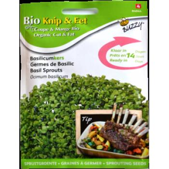 Seminte de Busuioc pentru Germinat Ecologic/BIO