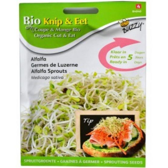 Seminte de Lucerna (Alfalfa) pentru Germinat Ecologic/BIO
