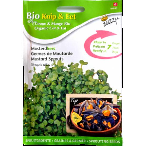 Seminte de Mustar pentru Germinat Ecologic/BIO