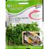 Seminte de Ridiche Japoneza (Daikon) pentru Germinat Ecologic/BIO